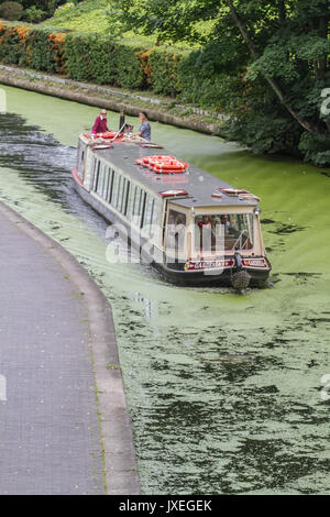 London, UK. 16th Aug, 2017. Regent's Canal London which is covered in growing algae due to the recent warm conditions - Stock Photo