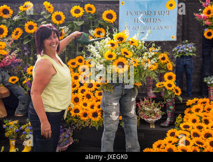 Southport, Merseyside, UK. 16th Aug, 2017. Nikki Green from 'Popular Farm Flowers' on the final day of preparations - Stock Photo