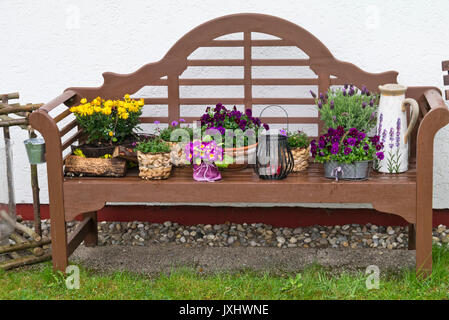 Chrysanthemums (Chrysanthemum), violets (Viola) and topped lavender (Lavandula stoechas) on a garden bench - Stock Photo