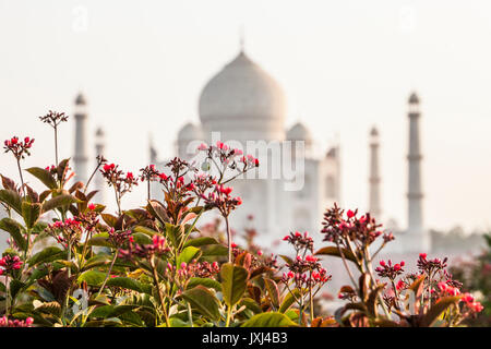 The Taj Mahal seen from the North across the Yamuna River in the afternoon, Agra, India. - Stock Photo
