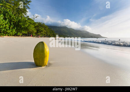 A fresh green coconut on the beach at Beau Vallon in Mahe, Seychelles with blurred people in the background - Stock Photo