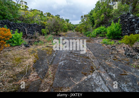 Caminhos de Santa Luzia trail, Pico island, Azores - Stock Photo