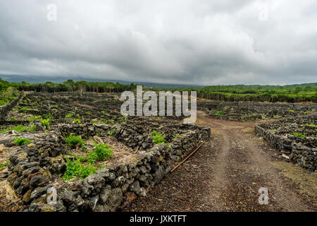 Old time vineyards along the Caminhos de Santa Luzia trail, Pico island, Azores - Stock Photo