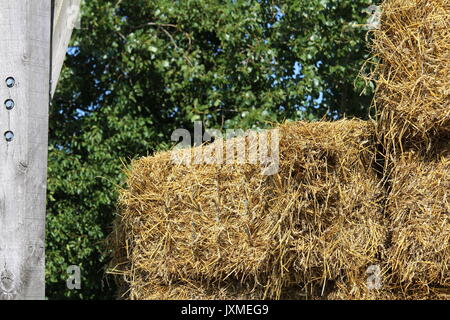 Straw to feed the horses of the stables placed in the hangar - Stock Photo