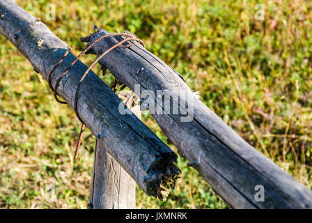 wooden fence details wrapped by a wire. simple rural style object on grassy background - Stock Photo