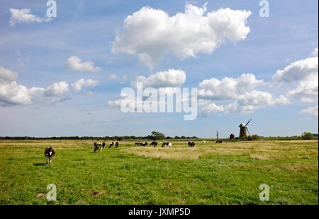 A small herd of cattle on grazing marshes in the Broads National Park at Potter Heigham, Norfolk, England, United - Stock Photo