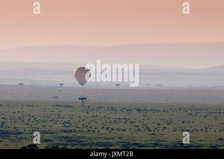 Balloon safari over Wildebeest migration, Masai Mara National Reserve, Kenya - Stock Photo