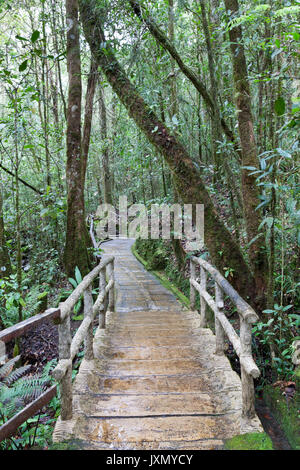 Wooden path in a tropical forest, Kinabalu Park, Borneo - Stock Photo