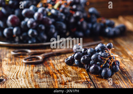 Blue Vine Grapes and Rusty Scissors on Wooden Table. - Stock Photo