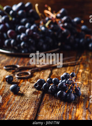 Little Blue Vine Grapes with Rusty Scissors and Grapes on Background. - Stock Photo