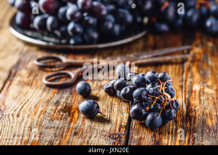 Blue Vine Grapes and Rusty Scissors on Wooden Background. - Stock Photo