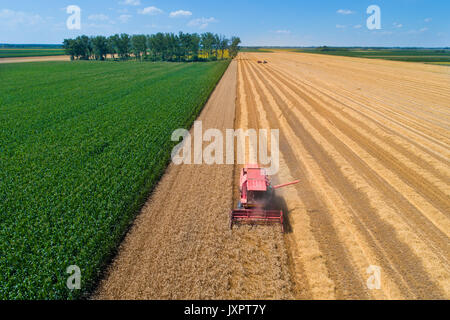 Aerial image of combine harvester working in golden wheat field. Harvest in summer agricultural works - Stock Photo