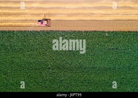 Top view of combine harvester working in golden wheat field. Harvesting season in agricultural works - Stock Photo
