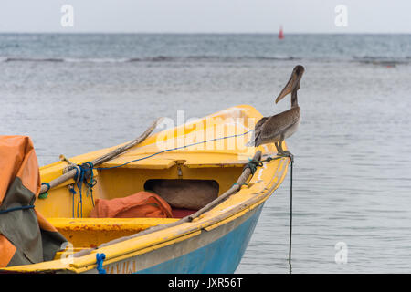 Brown pelican (Pelecanus occidentalis) standing on a colorful fishing boat in Tartane, Martinique - Stock Photo