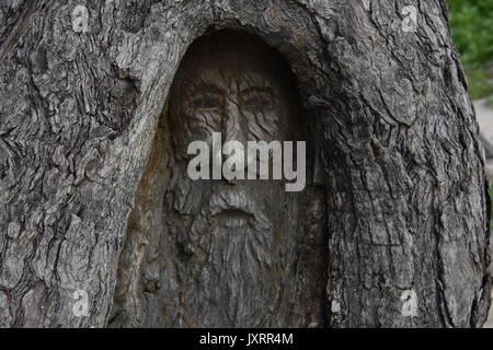 Tree Face Carving of Forest Spirit - Stock Photo