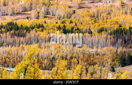 trees in autumn - Stock Photo