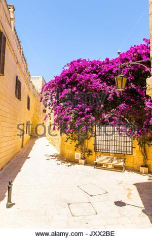bench under a purple flowering bougainvillea in a narrow lane of mdina, malta - Stock Photo