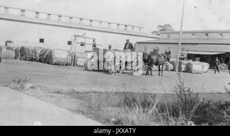 African American man wearing cap and dark jacket sitting in wagon driven by two horses, African American man wearing - Stock Photo