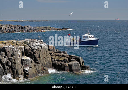 dive boat off the farne islands northumberland england - Stock Photo