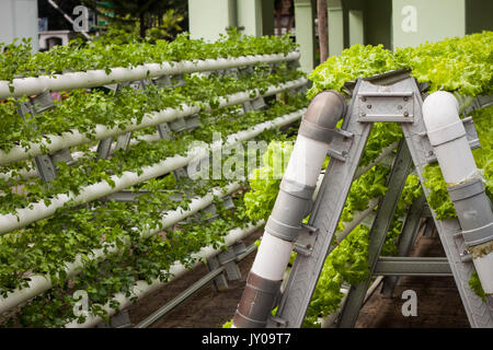vertical garden with pipe pvc photo taken in jogja yogyakarta Stock ...