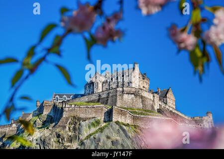 Edinburgh castle with spring tree in Scotland - Stock Photo