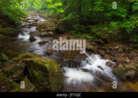 Ilse creek running in the Ilse valley / Ilsetal at the Harz National Park in summer, Saxony-Anhalt, Germany - Stock Photo