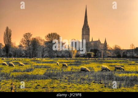 Salisbury Cathedral, seen from Harnham meadows, (processed as an HDR image). - Stock Photo