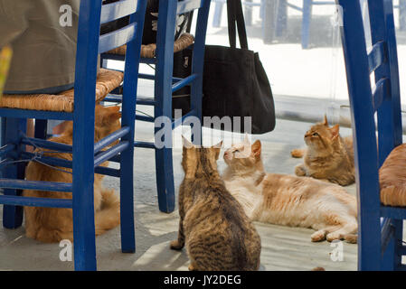 cat in a restaurant in Finiki harbor Karpathos island, Greece - Stock Photo