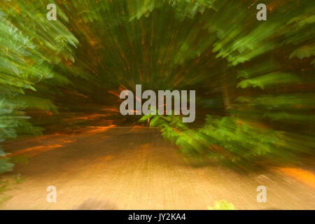 Abstract forest long exposure blurred background. - Stock Photo