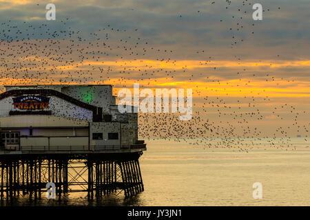 starling murmuration at Blackpool north pier UK - Stock Photo