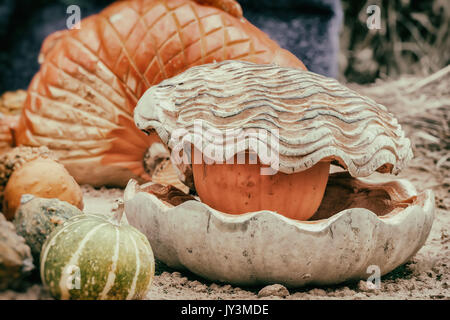 Thanksgiving Day and Halloween decoration. Carving from pumpkin, seashell with pearl. Autumn, fall background - Stock Photo