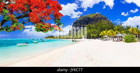 Tropical holidays in amazing Mauritius island. Le mprne beach with flamboyant tree - Stock Photo