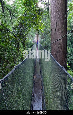 Long elevated walkway through the treetops in rainforest at Kinabalu Park, Sabah, Malaysian Borneo. - Stock Photo