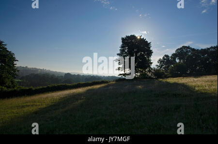 Early morning sun rays through tree in the Welsh countryside - Stock Photo