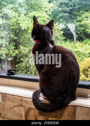 A black cat sits by a caravan window and gazes at the scene outside. - Stock Photo