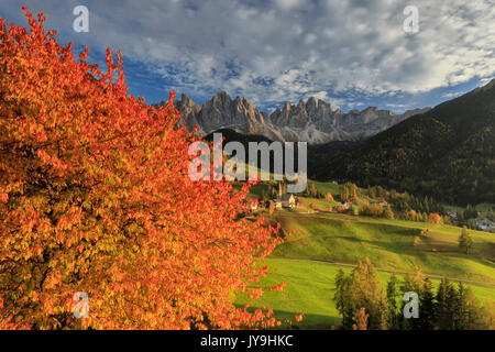The autumn colors of a tree overlooking Val di Funes  and St. Magdalena village. In the background the Odle Mountains. - Stock Photo