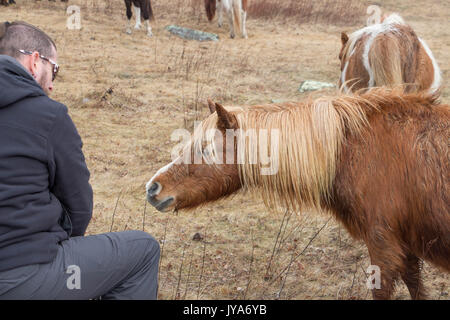 Hiker with friendly wild ponies at Grayson Highlands State Park - Stock Photo