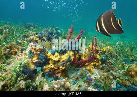 Colorful underwater marine life on the seabed in the Caribbean sea composed by corals, sponges, brittle stars, anemones - Stock Photo