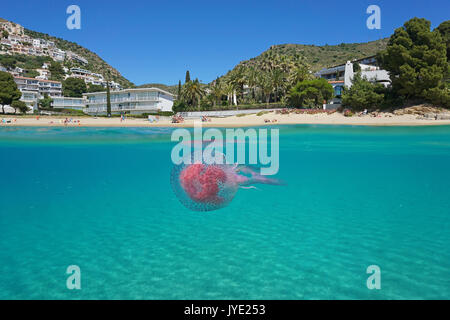 Over and under sea surface near a Mediterranean beach with a jellyfish underwater, Spain, Costa Brava, playa Almadrava, - Stock Photo