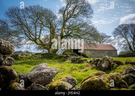 Emworthy Farm's abandoned barn in Dartmoor National Park, England, UK - Stock Photo