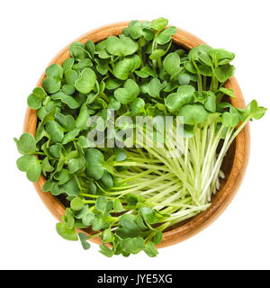 Daikon radish seedlings in wooden bowl. Sprouts of winter radish, also called Japanese or oriental radish and true - Stock Photo
