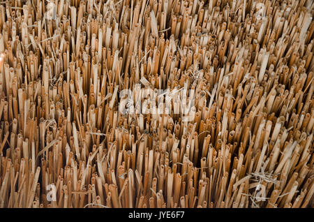 Texture, yellow straw roof in close-up. Horizontal photo, wallpaper - Stock Photo