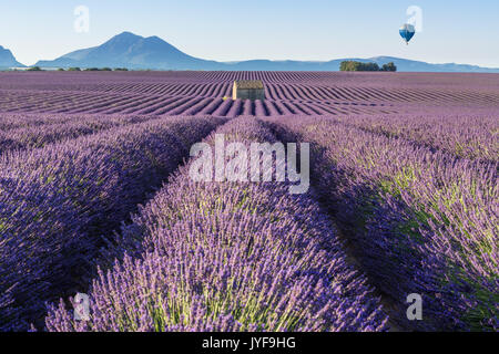 Hot air balloon over Lavender fields of Valensole. Provence, France - Stock Photo