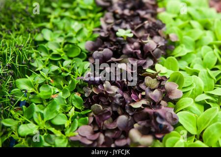 A mix of salads - Stock Photo