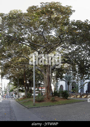 St. Francis square and its centuries-old trees in Santa Cruz de Tenerife, Spain - Stock Photo