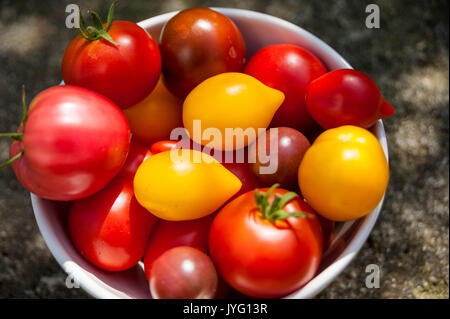 Varieties of Tomatoes - Stock Photo
