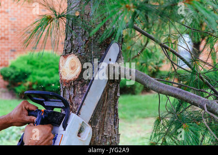 Professional is cutting trees using a chainsaw Cutting trees with saw - Stock Photo