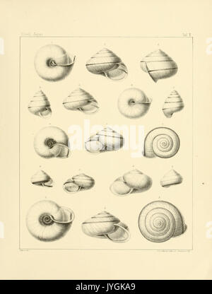 Abhandlungen der Senckenbergischen Naturforschenden Gesellschaft BHL16110455 - Stock Photo