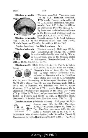 A dictionary of the fossils of Pennsylvania and neighboring states named in the reports and catalogues of the survey - Stock Photo