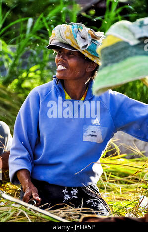 Asia, South East Asia, Indonesia, Bali, Amed. Workers at threshing rice - Stock Photo